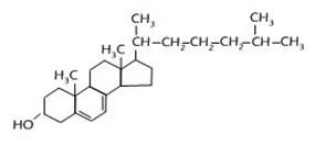 Lipid 27
