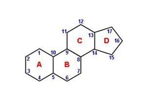Lipid 52