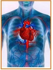 Soal 14 Peredaran darah