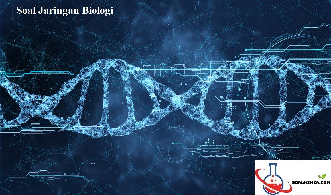 Soal Jaringan Biologi
