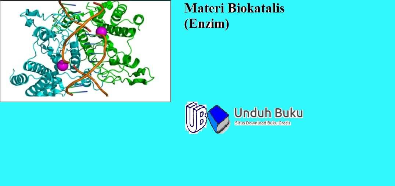 Biokatalisator