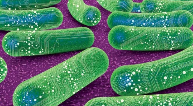 Materi Biologi Sintetik (Synthetic Biology)