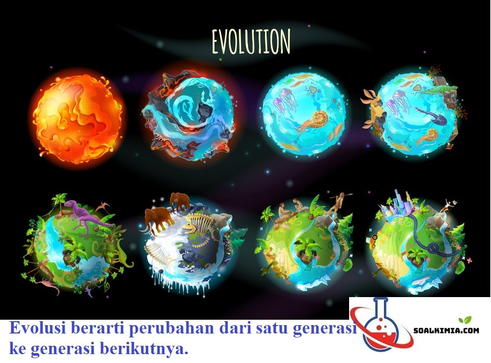 soal evolusi