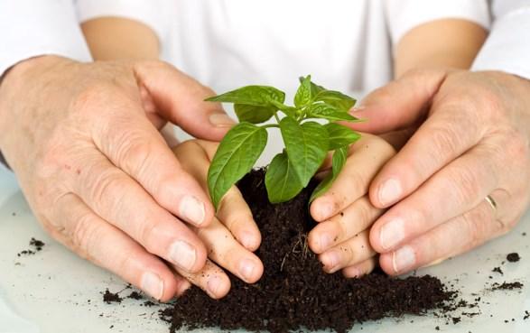 pendidikan lingkungan hidup