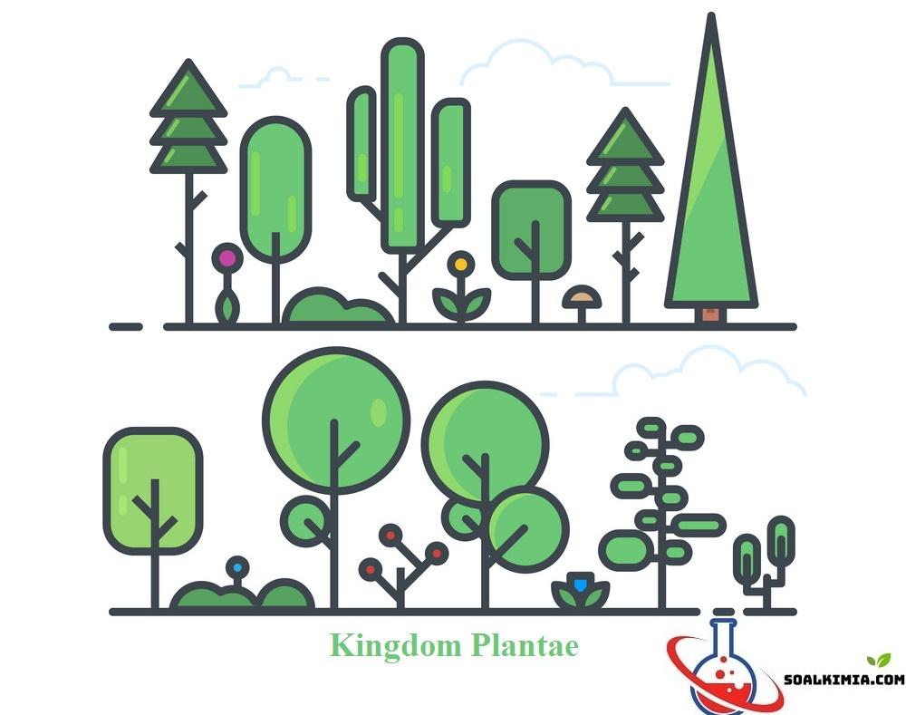 soal kingdom plantae