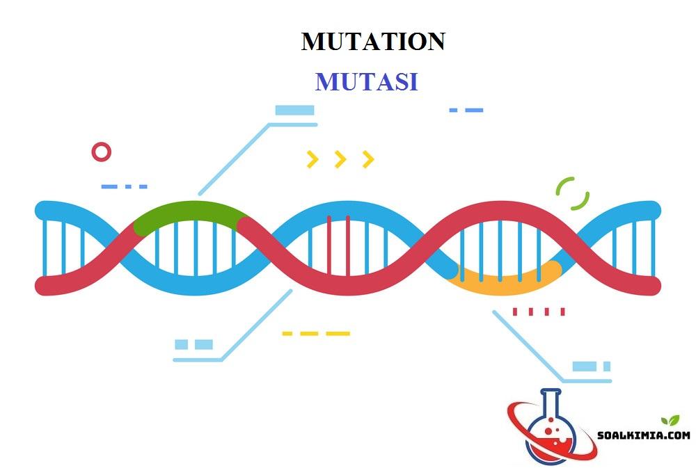 Soal mutasi