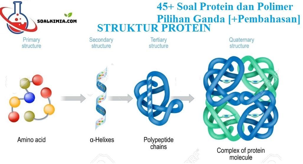 45+ Soal Protein dan Polimer