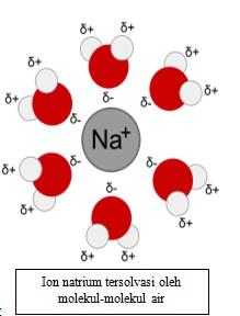 Ion natrium tersolvasi oleh molekul-molekul air