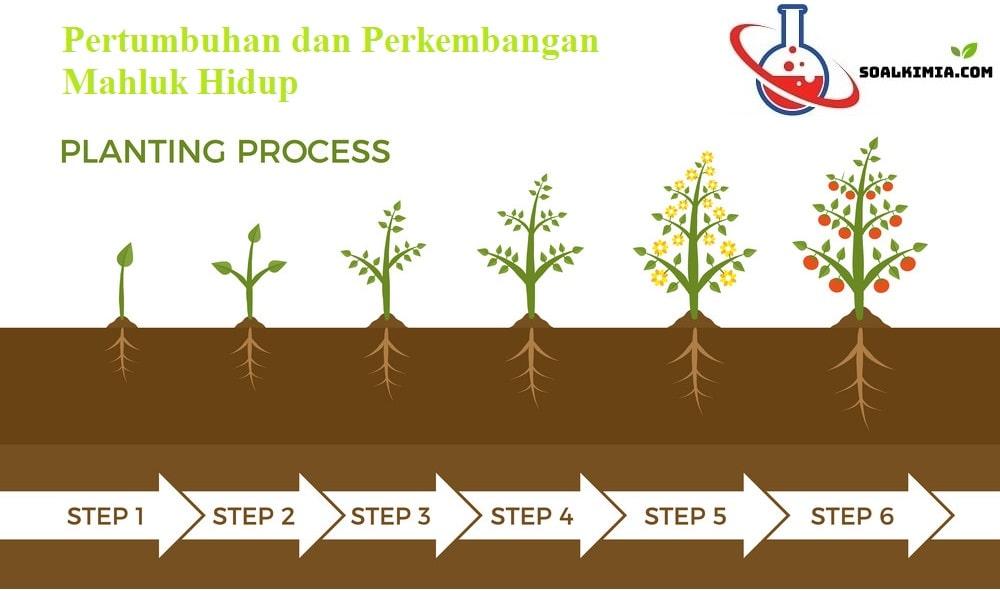 Soal Pertumbuhan dan Perkembangan pada tumbuhan
