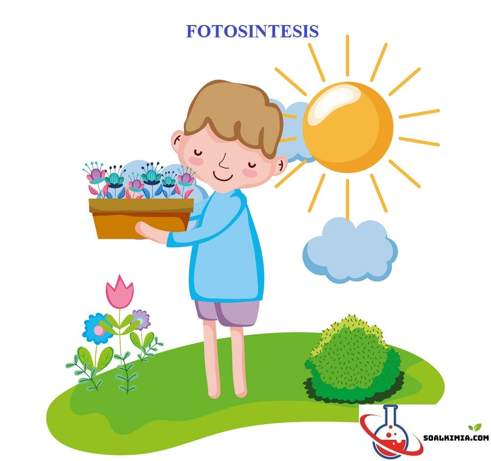 Soal fotosintesis