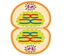 soal biologi usbn no 25