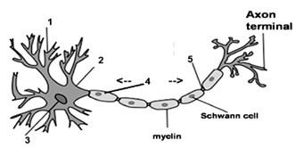 soal biologi usbn no 9
