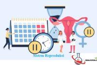 soal sistem reproduksi