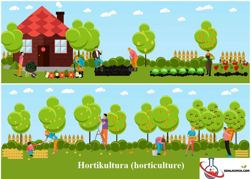 Contoh Soal Hortikultura