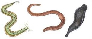 soal hewan invertebrata no 5