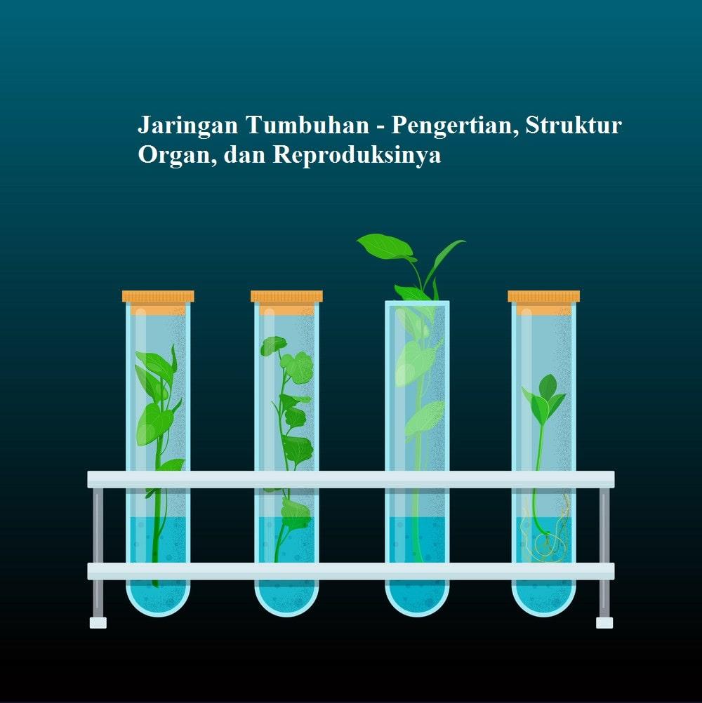 Jaringan Tumbuhan - Pengertian, Struktur Organ, dan Reproduksinya