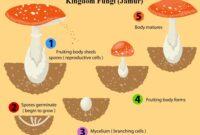 Kingdom Fungi (Jamur)