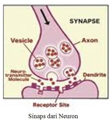 Sinaps dari Neuron