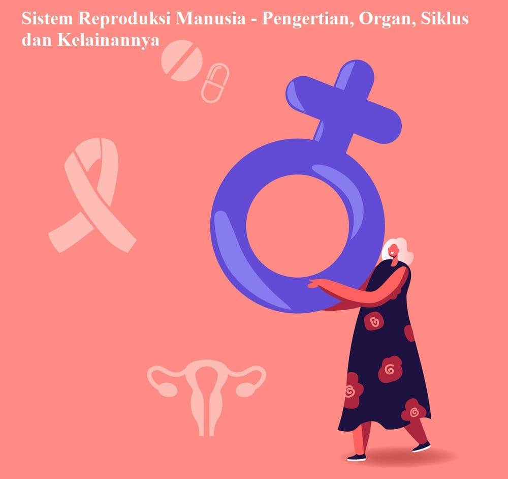 Sistem Reproduksi Manusia - Pengertian, Organ, Siklus dan Kelainannya