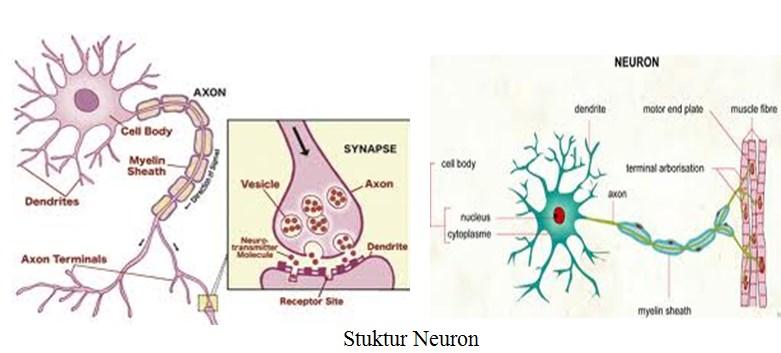 Stuktur Neuron