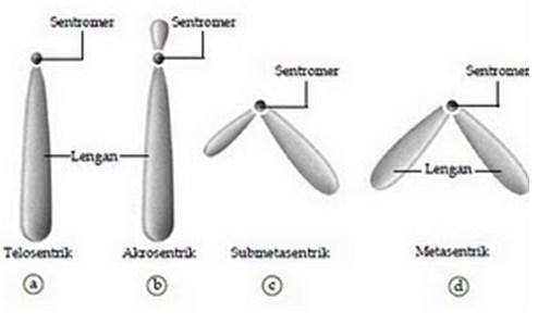 Tipe-Tipe Kromosom