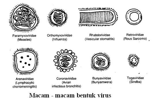 Morfologi Virus dan Sifat - Sifat Virus