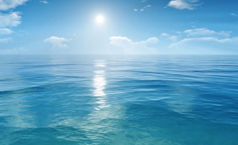 contoh ekosistem air laut