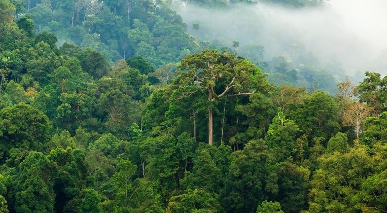 contoh ekosistem hutan hujan tropis
