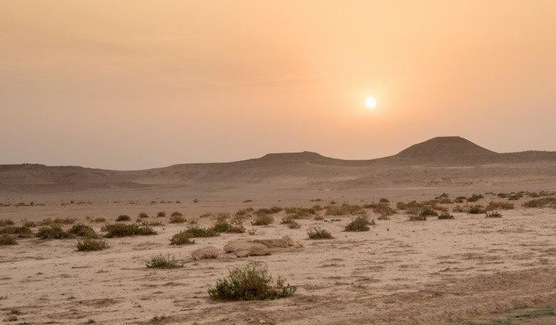 ekosistem padang gurun