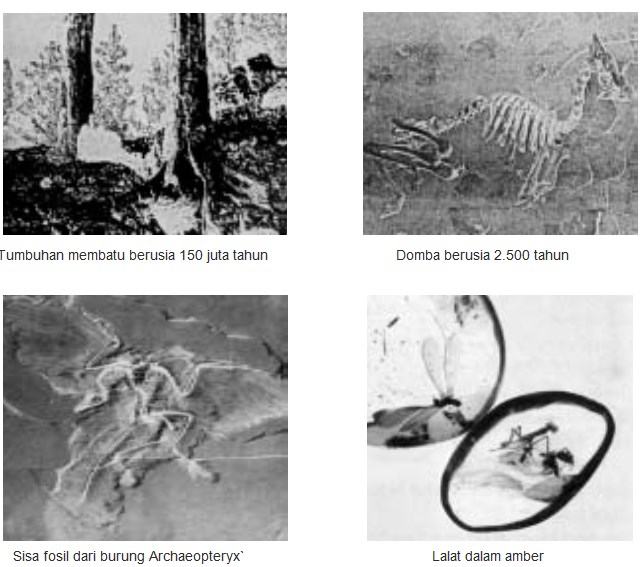 Fosil sebagai Salah Satu Bukti