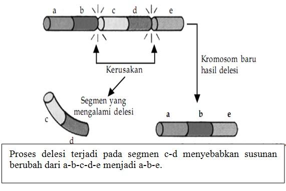 Proses delesi terjadi pada segmen c-d
