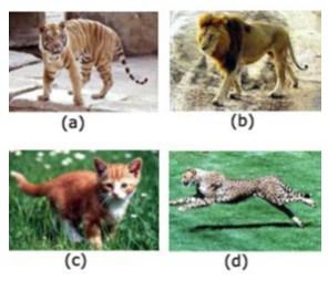 Keanekaragaman pada tingkat spesies
