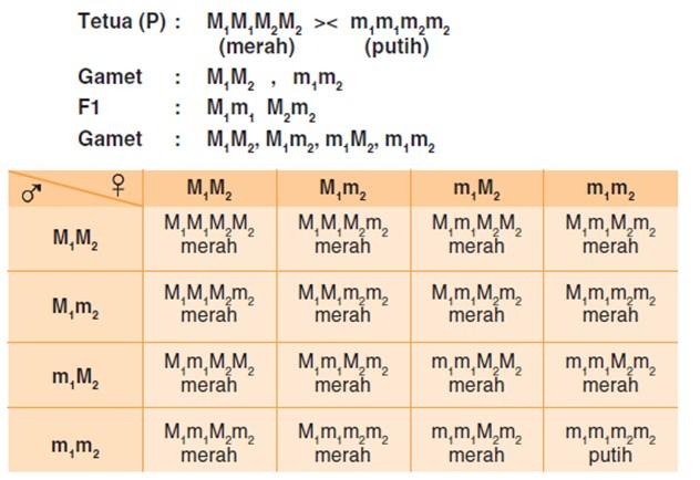 polimeri pola hereditas