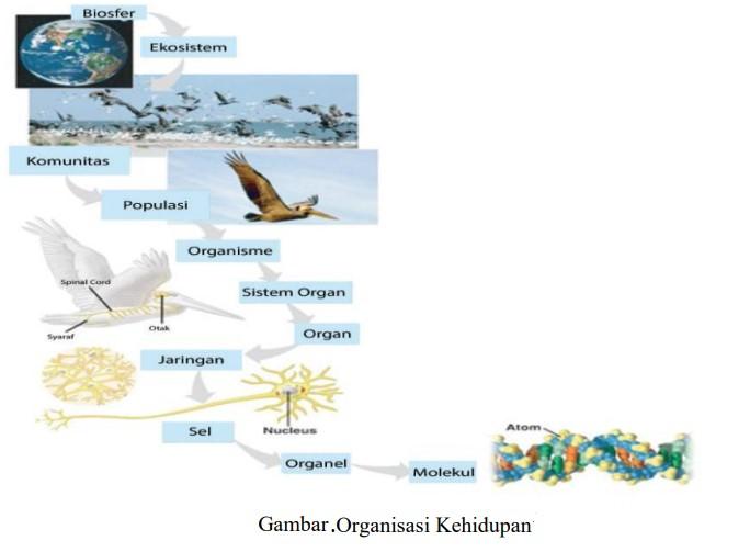 Soal Sistem Organisasi Kehidupan
