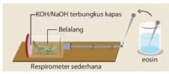 soal energi dalam sistem kehidupan no-6