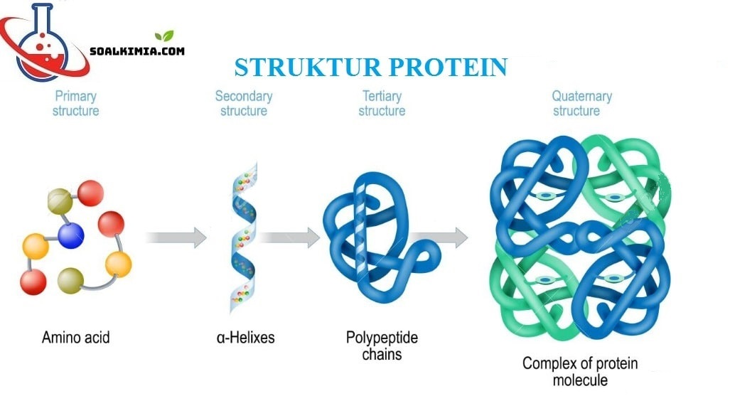 Soal Protein